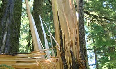 Medioambiente impulsa el uso de la biomasa